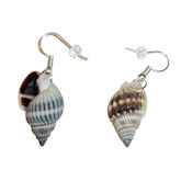 RTD-3998 - Pair of Spiral Shell Earrings